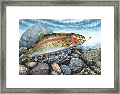 Rainbow Trout Stream Framed Print by JQ Licensing
