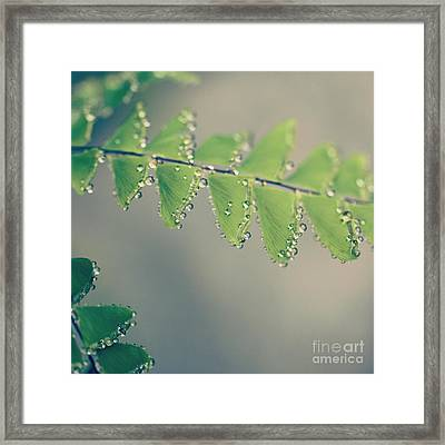 Raindrops On Ferns - Hipster Photo Square Framed Print by Charmian Vistaunet