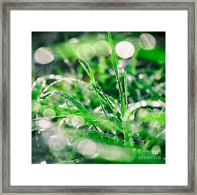 Raindrops Framed Print by SK Pfphotography