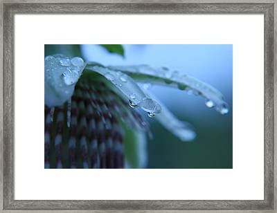 Rainflower Framed Print by Linda Russell