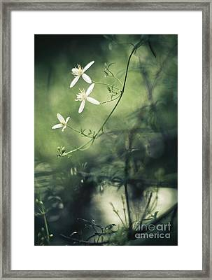 Rainforest Dreaming Framed Print by David Lade