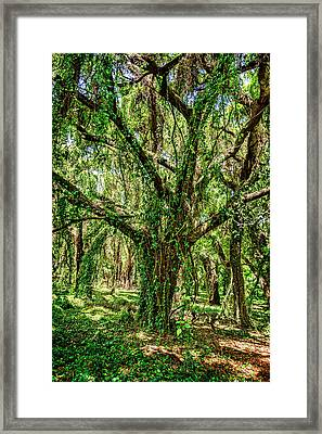 Rainforest Framed Print by Kelley King