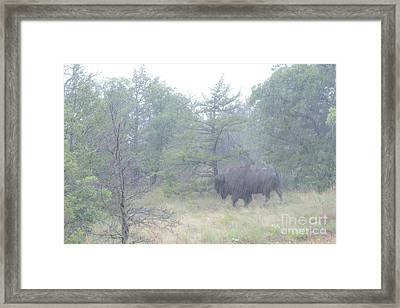 Rainy Day For The Bison Framed Print by Tamyra Ayles