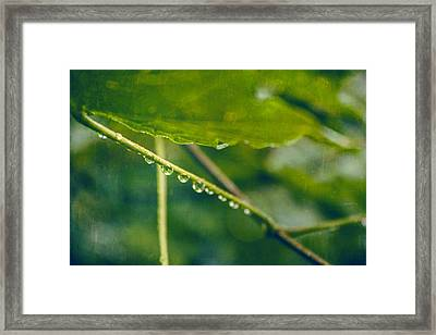 Rainy Green Leaves Framed Print by Thubakabra