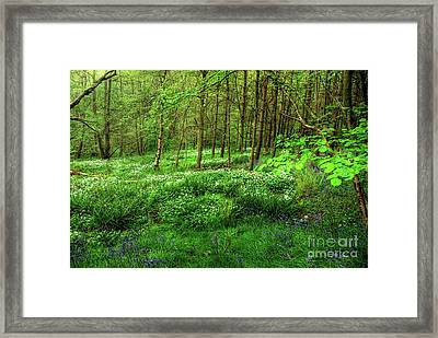 Ramsons And Bluebells Framed Print by John Edwards