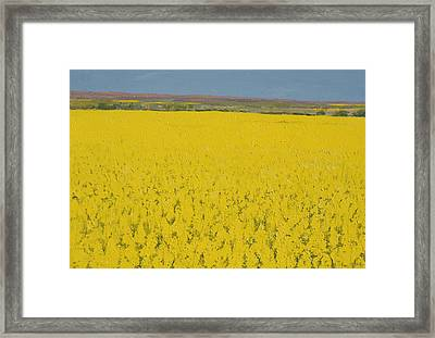 Rape Field Framed Print by Alan Byrne