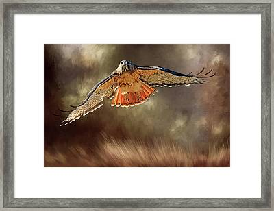 Raptor Framed Print by Donna Kennedy