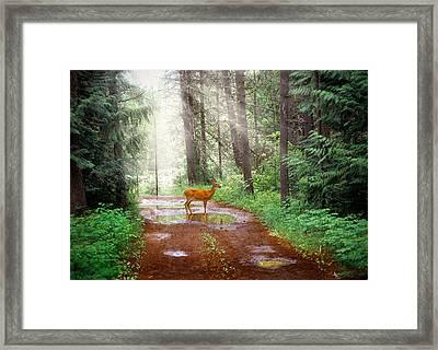Rare Moment Framed Print by Leland D Howard