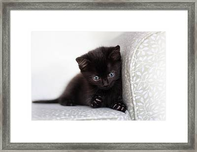Rawr Framed Print by Amy Tyler