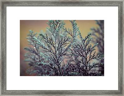 RD Framed Print by SK Pfphotography