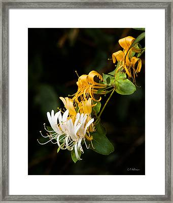 Reaching Framed Print by Christopher Holmes