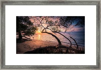 Reaching For The Sun Framed Print by Marvin Spates