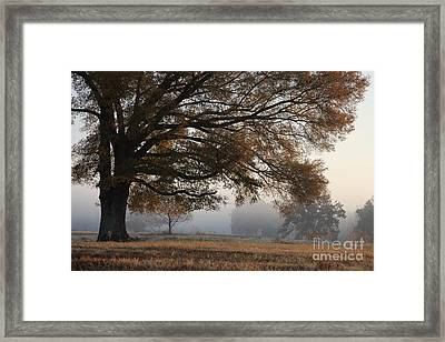 Reaching Out Framed Print by Amanda Barcon