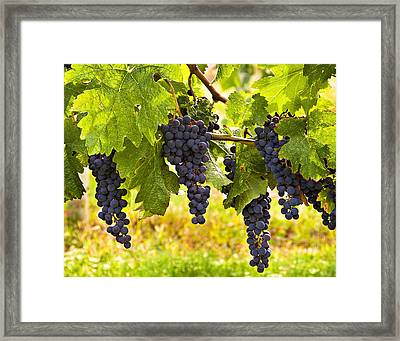 Ready For Harvest Framed Print by Marion McCristall