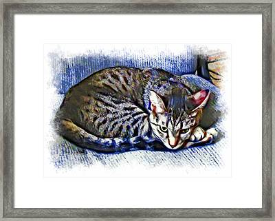 Ready For Napping Framed Print by David G Paul