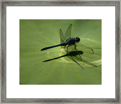 Ready For Takeoff Framed Print by Chris Lord
