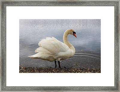 Ready For The Day Framed Print by Rusalka Koroleva