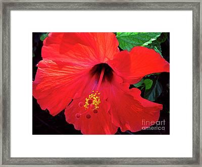 Reb Hibiscus Flower Framed Print by Bette Phelan