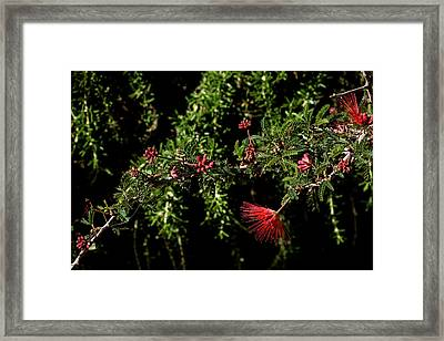 Red And Black Framed Print by Glenn DiPaola