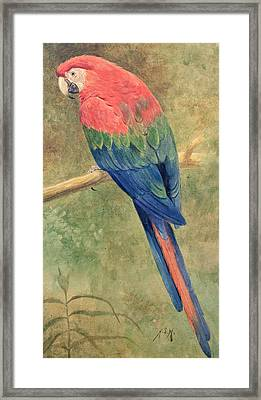 Red And Blue Macaw Framed Print by Henry Stacey Marks