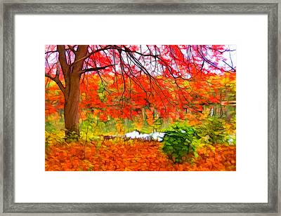 Red And Orange Framed Print by Lilia D