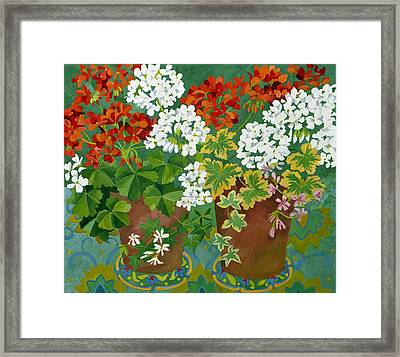 Red And White Geraniums In Pots Framed Print by Jennifer Abbot