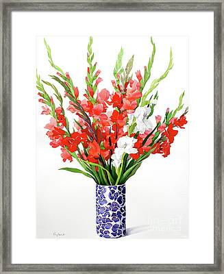 Red And White Gladioli Framed Print by Christopher Ryland