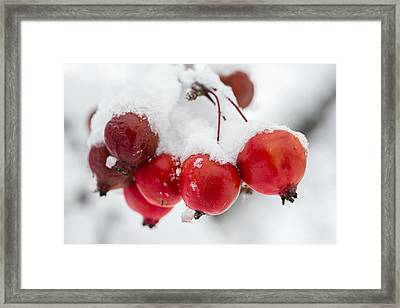 Red And White Framed Print by Sebastian Musial