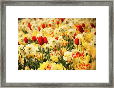 Red And Yellow Framed Print by Tamyra Ayles