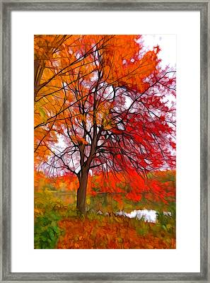 Red Autumn Tree Framed Print by Lilia D