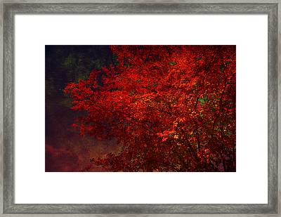 Red Autumn Tree Framed Print by Susanne Van Hulst