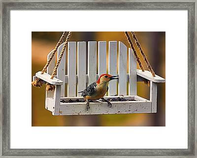 Red Bellied On Swing - 5 Framed Print by Bill Tiepelman