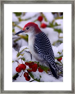 Red Bellied Woodpecker Framed Print by Ron Jones