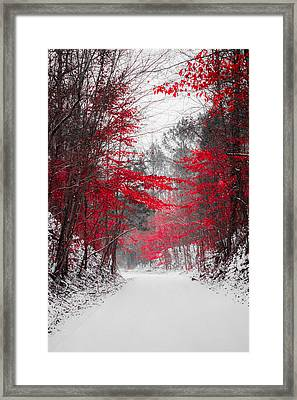 Red Blossoms  Framed Print by Parker Cunningham