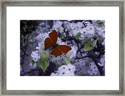 Red Butterfly On Cherry Blossoms Framed Print by Garry Gay