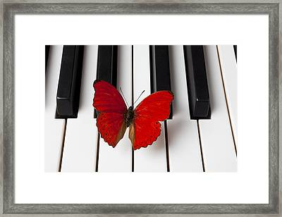 Red Butterfly On Piano Keys Framed Print by Garry Gay