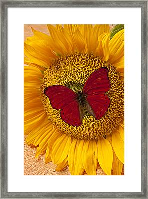 Red Butterfly On Sunflower Framed Print by Garry Gay