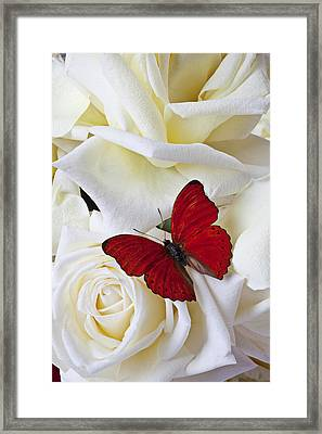 Red Butterfly On White Roses Framed Print by Garry Gay