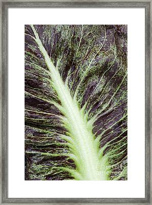 Red Chicory Framed Print by Tim Gainey