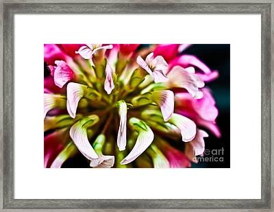 Red Clover Flower Framed Print by Ryan Kelly