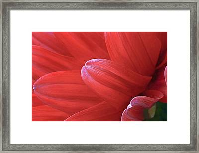 Red Dalia Side Profile Framed Print by James Steele
