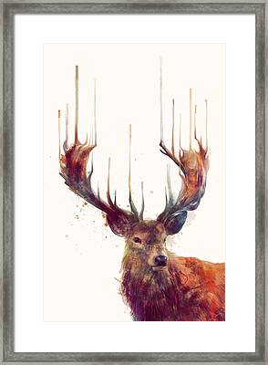 Red Deer Framed Print by Amy Hamilton