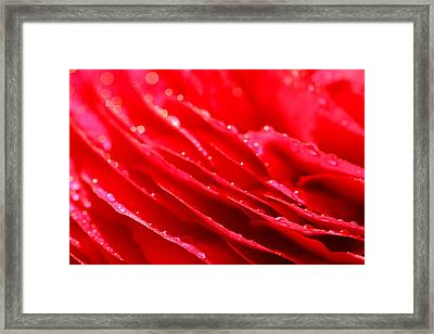 Red Drops Framed Print by Heike Hultsch