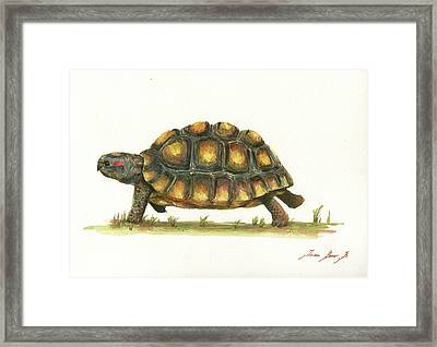 Red Footed Tortoise  Framed Print by Juan Bosco