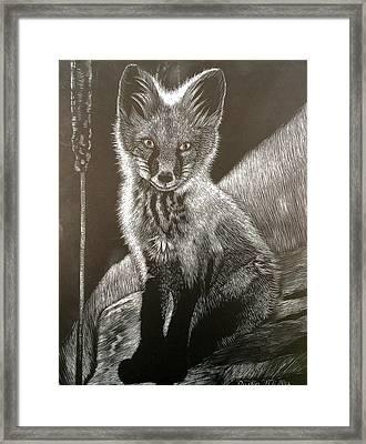 Red Fox Kit Framed Print by Dustin Miller