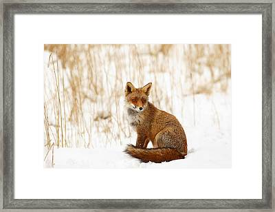 Red Fox Sitting In The Snow Framed Print by Roeselien Raimond