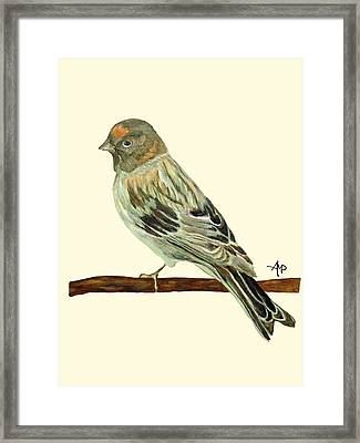 Red-fronted Serin Framed Print by Angeles M Pomata