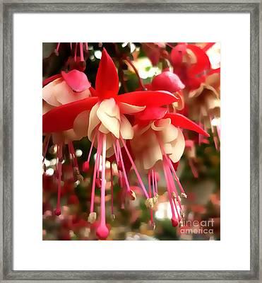 Red Fuschia Framed Print by Jeff Breiman