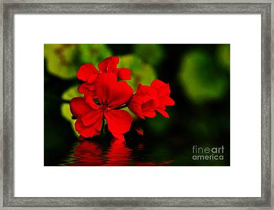Red Geranium On Water Framed Print by Kaye Menner