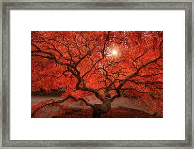 Red Lace Framed Print by Dan Mihai